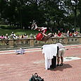 Jumping people in Central Park, NYC