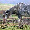 Rain Soaked Horse