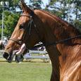 Horse Show #10