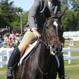 Horse Show #1
