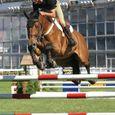 Horse Show #14
