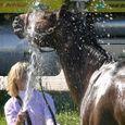 Horse Show #21