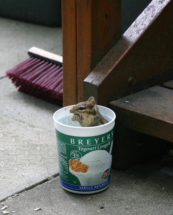 Self-Serve Peanut Bucket