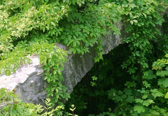Vined Arch