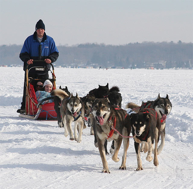 Dogsledding on Lake Simcoe