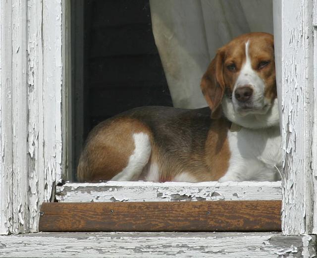 Window Dog