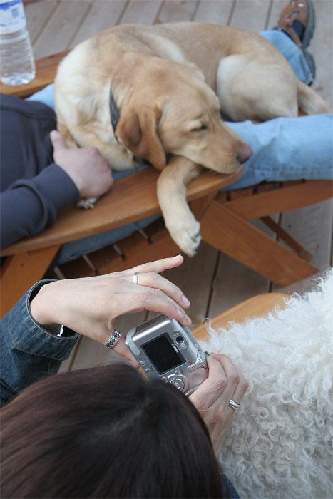 Dog Lovers #2