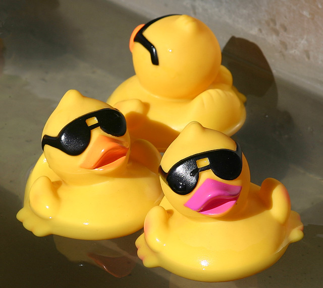 Cool Ducks